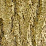 Resource - 2D Texture - Nature - Bark