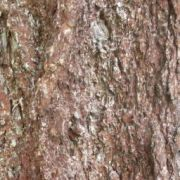 Resource - 2D Texture - Nature - Bark
