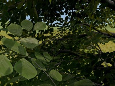 Real-Time Rendering of Trees